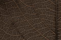 Текстура лист или предпосылка лист Стоковые Фотографии RF