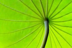 Текстура лист как предпосылка Стоковая Фотография RF
