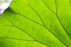 Текстура лист как предпосылка Стоковые Изображения