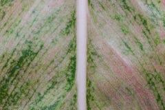 Текстура лист макроса Стоковая Фотография