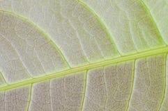 Текстура лист макроса Стоковая Фотография RF
