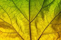 Текстура лист осени Стоковые Изображения
