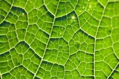 Текстура лист цвета растительности естественный взгляд макроса картины завода Селективный фокус, поле малой глубины Стоковая Фотография RF