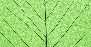 Текстура лист Стоковые Фото
