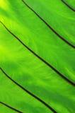 Текстура лист Стоковое Изображение