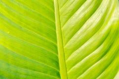 Текстура лист Стоковые Изображения