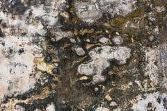 Текстура лишайника на стене цемента Стоковое Изображение RF