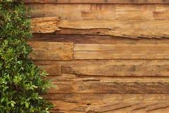 Текстура и завод стены деревянная Стоковое Фото