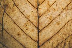 Текстура и предпосылка лист Брайна Взгляд макроса сухой текстуры лист Органическая и естественная картина абстрактные текстура и  Стоковое фото RF
