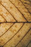 Текстура и предпосылка лист Брайна Взгляд макроса сухой текстуры лист Органическая и естественная картина абстрактные текстура и  Стоковое Изображение RF