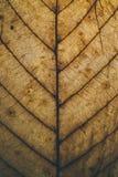 Текстура и предпосылка лист Брайна Взгляд макроса сухой текстуры лист Органическая и естественная картина абстрактные текстура и  Стоковое Фото