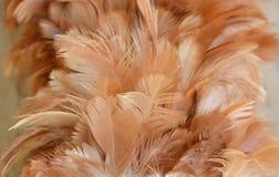 Текстура и предпосылка припудривания пера цыпленка деревянные Стоковые Изображения RF