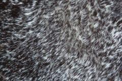 Текстура и предпосылка Стоковая Фотография RF