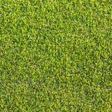 Текстура и предпосылки зеленой травы Стоковая Фотография RF