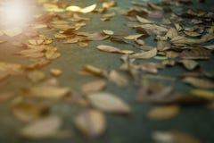 Текстура и фокус предпосылки выборочный высушенного falle листьев стоковое фото