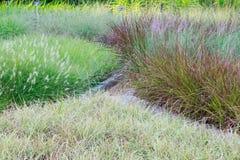 текстура иллюстрации травы произведения искысства ваша Стоковые Изображения RF