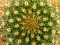 текстура кактуса Стоковое фото RF