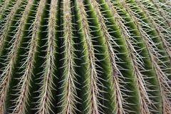 Текстура кактуса Стоковые Фото