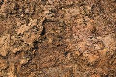 Текстура 3487 - каменистый грунт Стоковое Изображение