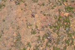 Текстура 3683 - каменистый грунт Стоковая Фотография