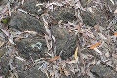 Текстура 4227 - каменистый грунт Стоковые Фотографии RF