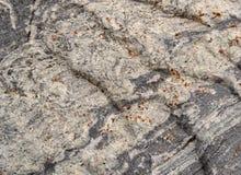 Текстура 4889 - камень Стоковые Фото