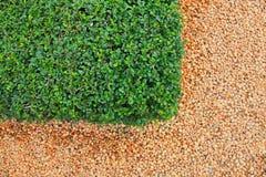 Текстура камней и травы камушка Стоковое Изображение
