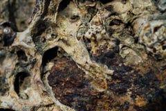 Текстура камня моря с ржавчиной Стоковое Фото