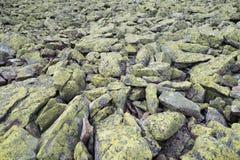 Текстура камня мха лишайника Стоковые Изображения
