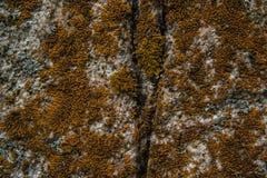 текстура камня утеса мха Текстура картины природы безшовная каменная текстура Стоковое фото RF