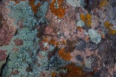 текстура камня утеса мха Конец естественной предпосылки утеса вверх Стоковая Фотография