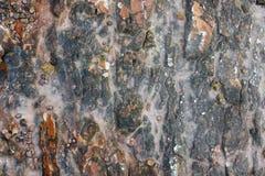 текстура камня утеса мха Стоковая Фотография