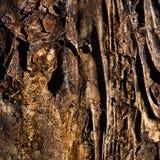 текстура камня фасада детали предпосылки зодчества Стоковые Изображения RF