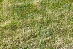текстура картины зеленого цвета травы предпосылки Стоковое Фото