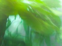Текстура картины предпосылки природы аквариумных растени Стоковые Фотографии RF
