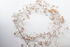 Текстура картины с зелеными сухими листьями подпрыгивает на белой предпосылке Плоское положение, концепция взгляда сверху минимал стоковая фотография rf