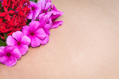 Текстура картона на заднем плане с красными цветками и розами в углах Стоковое Изображение RF