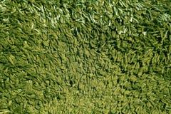 Текстура ковра зеленого цвета Стоковые Фото
