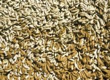 Текстура ковра ткани цвета Стоковое Изображение RF
