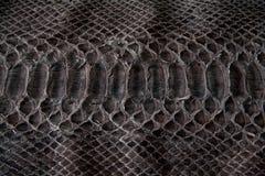 Текстура кожаной, черной кобры стоковые фотографии rf