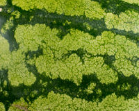 Текстура кожи арбуза стоковая фотография