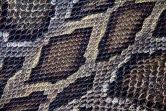 Текстура кожи змейки горжетки Стоковое Изображение