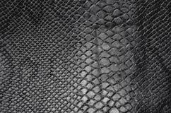 Текстура кожи змейки Стоковое Изображение