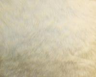 Текстура кожи коровы - мода меха крупного плана Стоковое Изображение RF