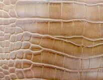 Текстура кожи крокодила Брайна стоковое фото rf