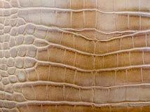 Текстура кожи крокодила Брайна стоковая фотография