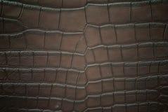 текстура кожи крокодила живота пресноводная Стоковое Фото