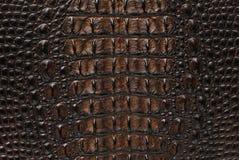 текстура кожи крокодила косточки предпосылки пресноводная стоковые фотографии rf