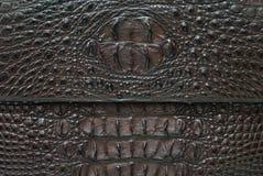 текстура кожи крокодила косточки предпосылки пресноводная Стоковые Фото