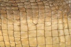 текстура кожи крокодила s Стоковая Фотография RF